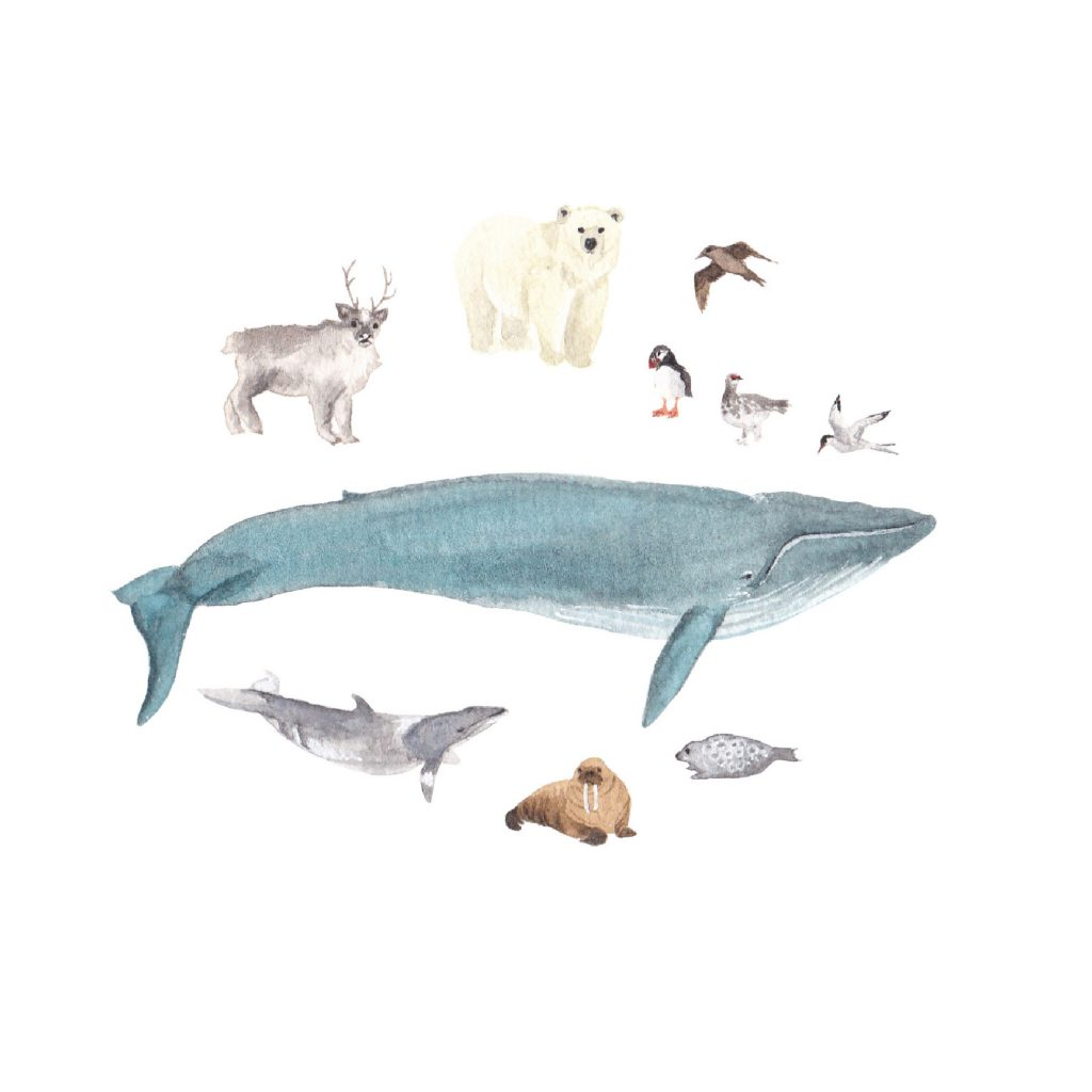 'Arctic Animals' by Susannah Crispe