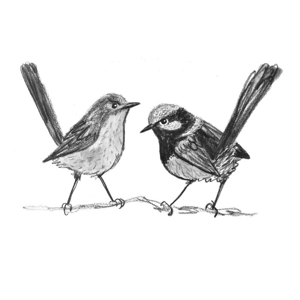 'Wrens with attitude' by Sylvia Morris