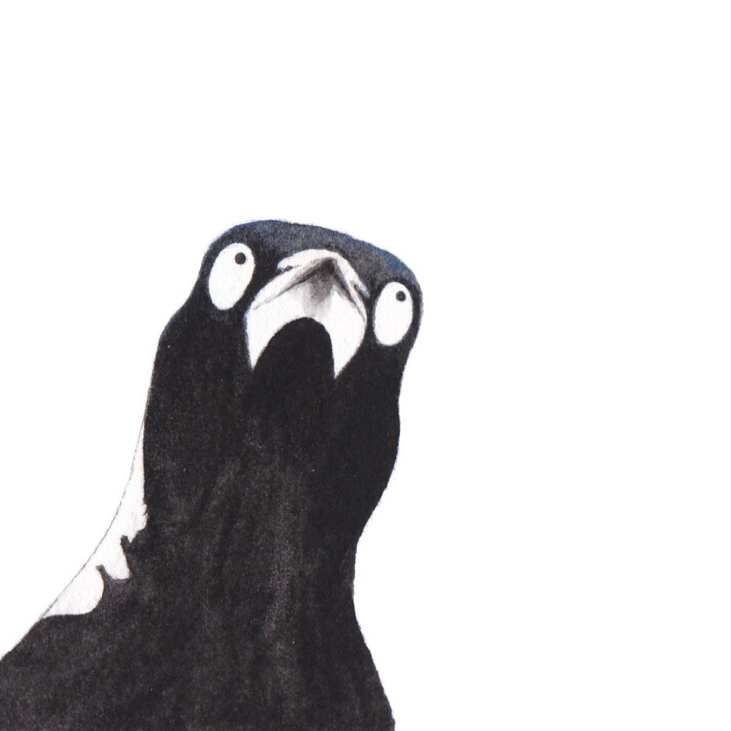 'Magpie' by Susannah Crispe