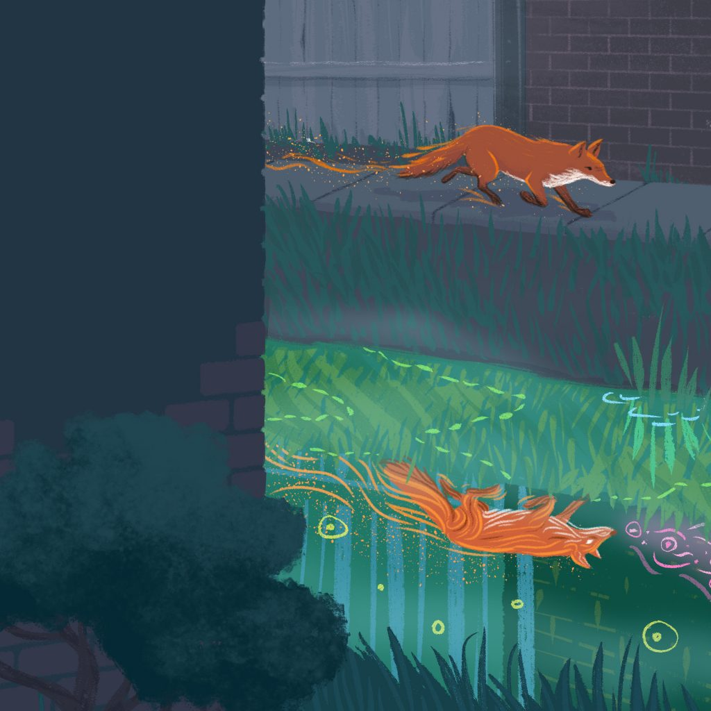 'Fox!' by Sylvia Morris