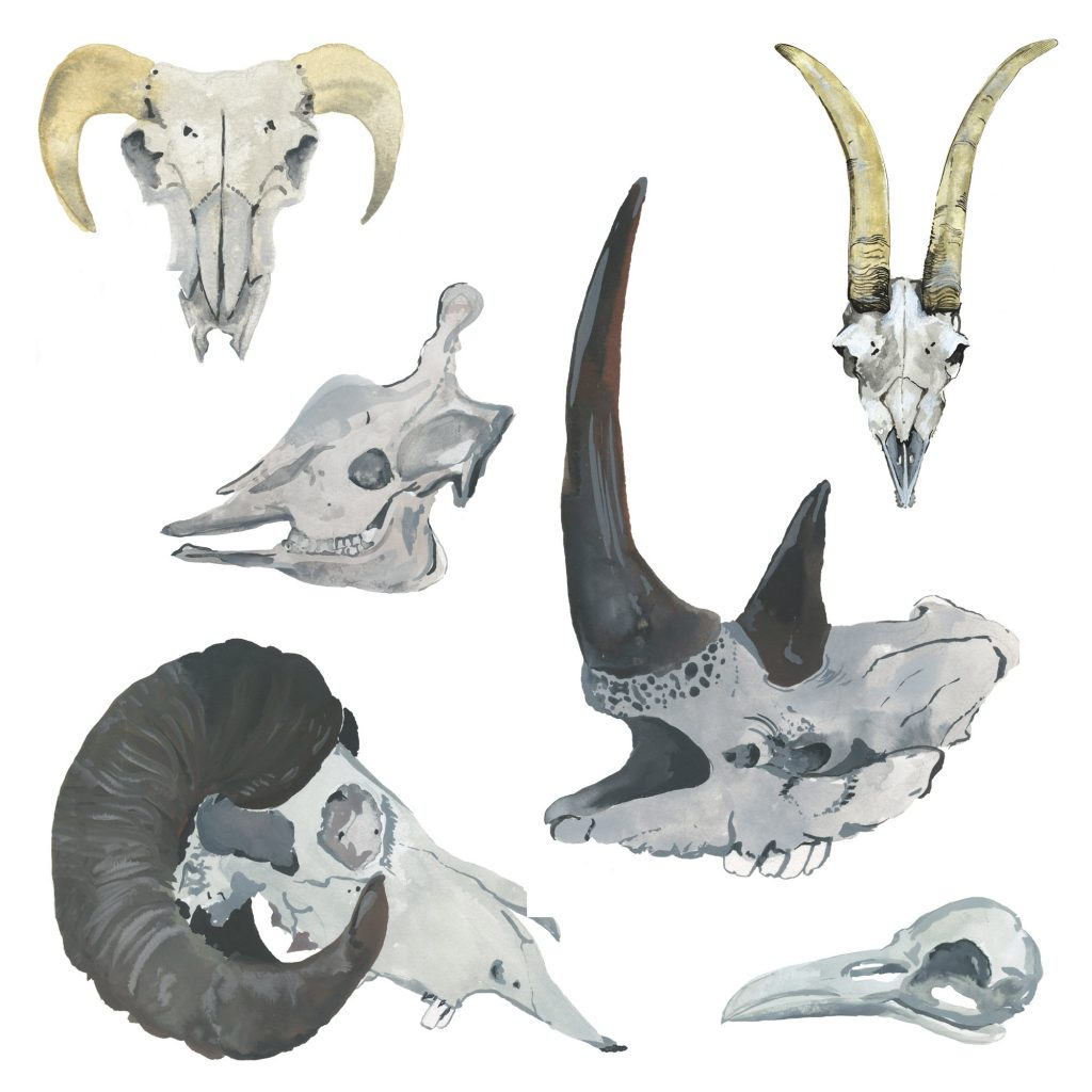 'Watercolour Animal Skulls' by Alicia Rogerson