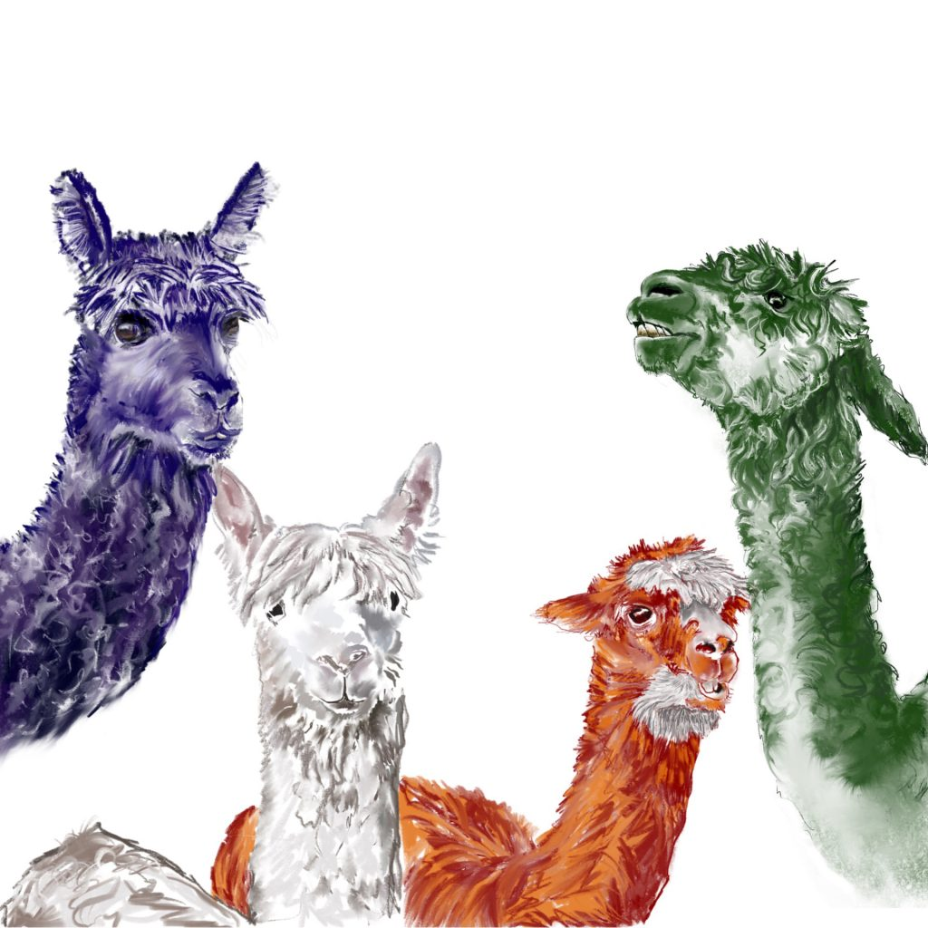 'Alpaca Pac' by Helen Alker