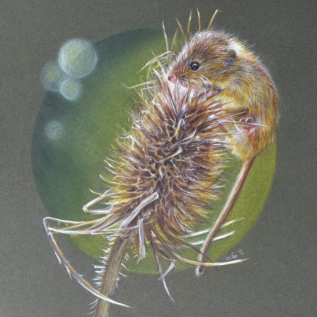 'Fieldmouse' by Lesley McGee