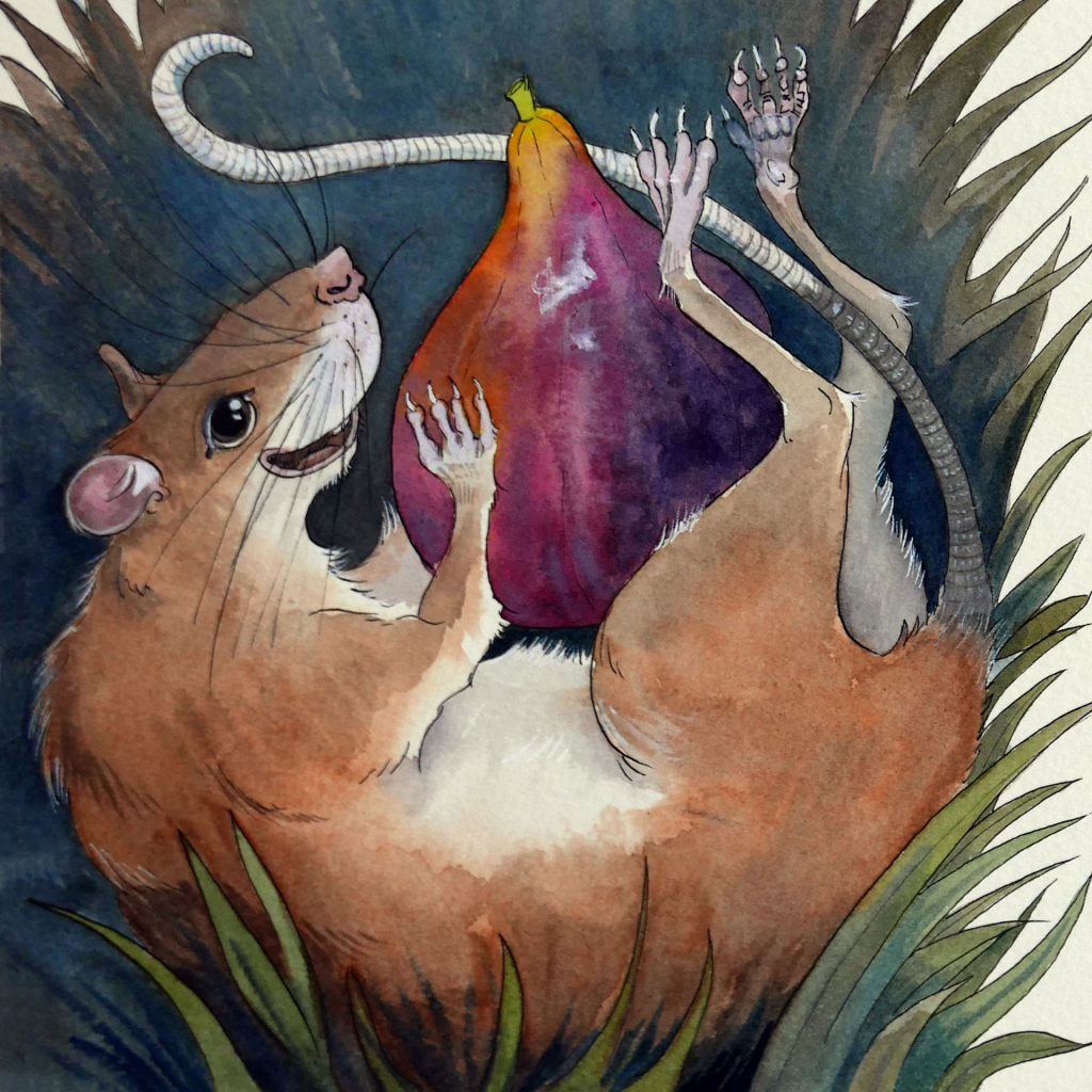 'Bush Rat' by Amber W Johnson