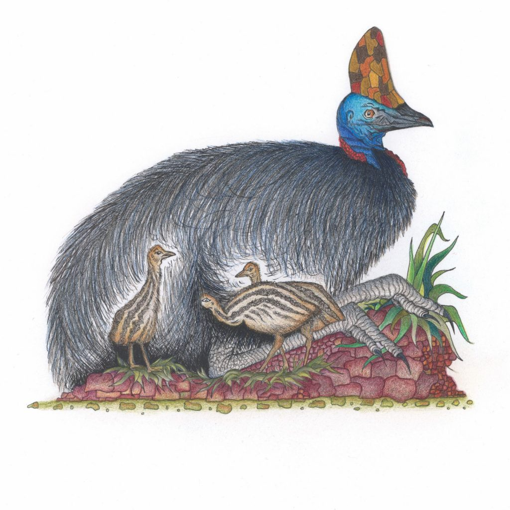 'The Cassowary's Gift' by Kathryn Lovejoy