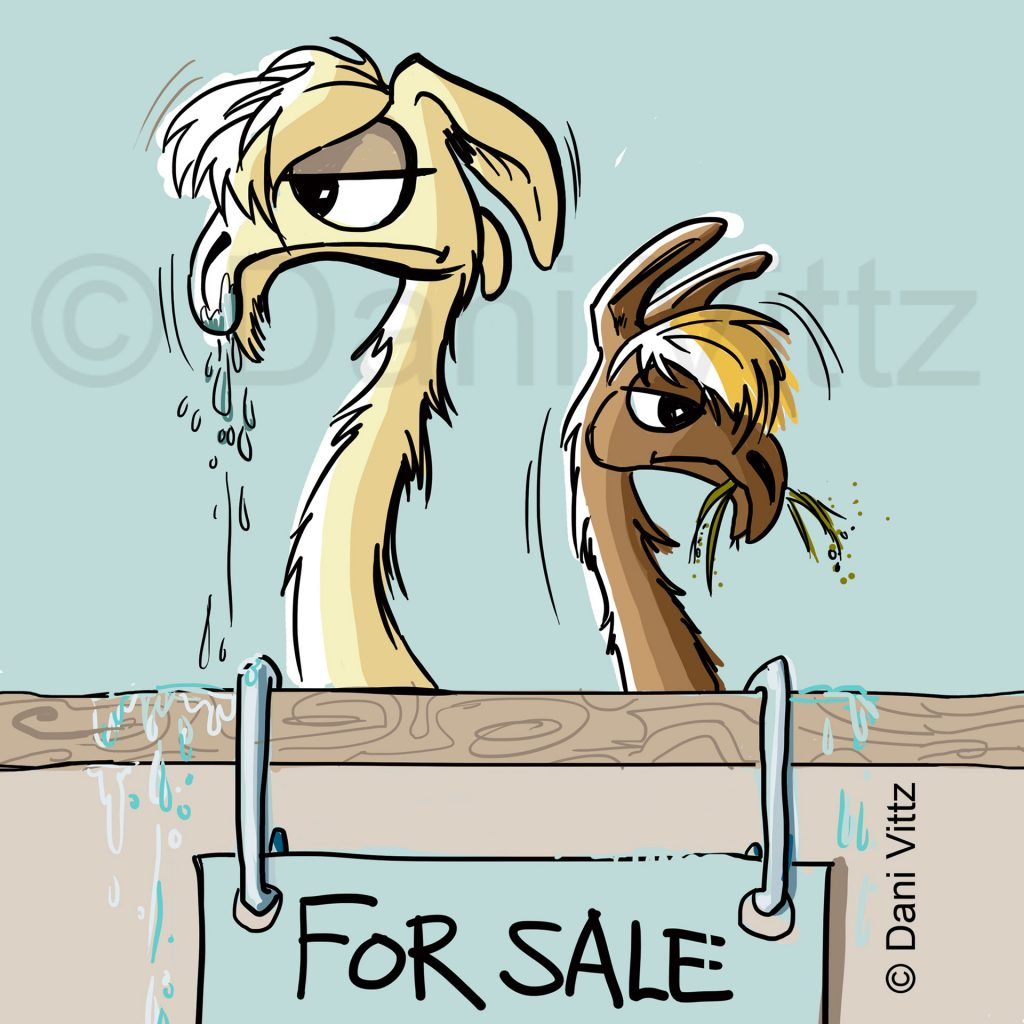 'Spitting Llamas for Sale' by Dani Vittz