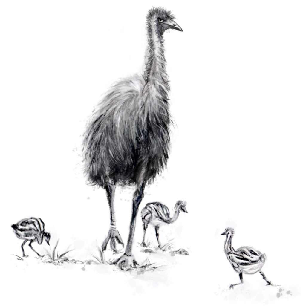 'Emu And Chicks' by Helen Alker