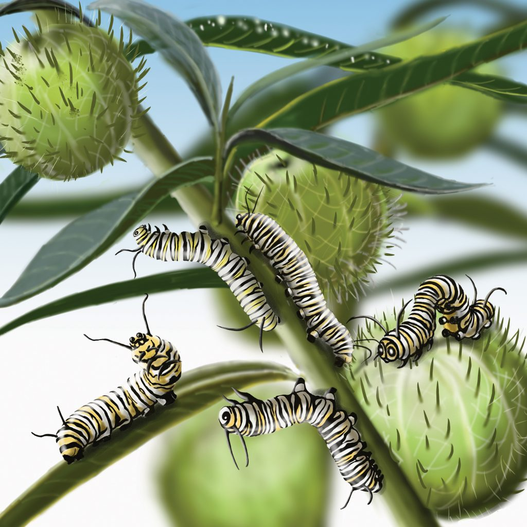'Caterpillars - page from Forest Wonder' illustrated by Muza Ulasowski