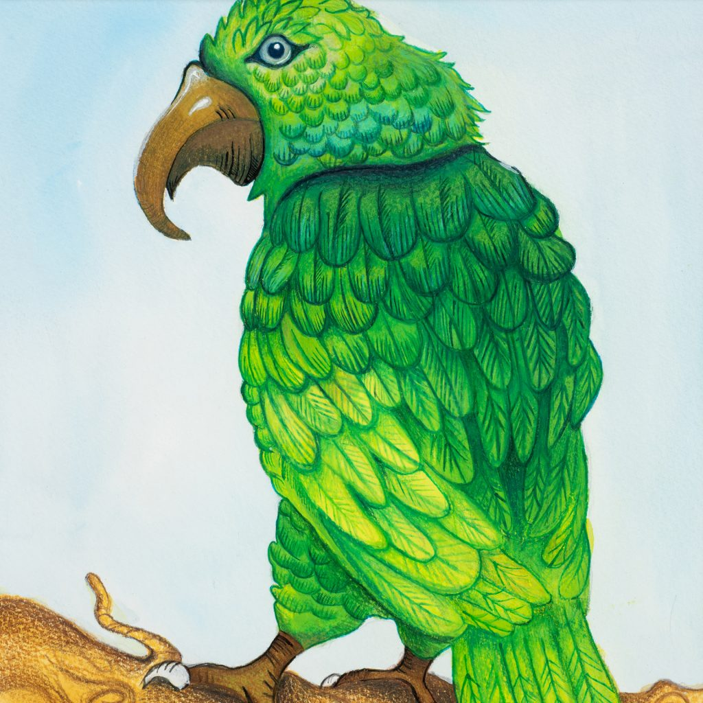 'Kea' by Stephanie Bell