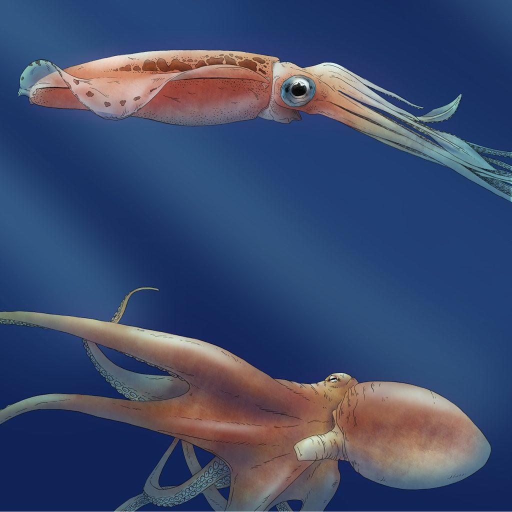'Squid vs Octopus' by Lauren Mullinder