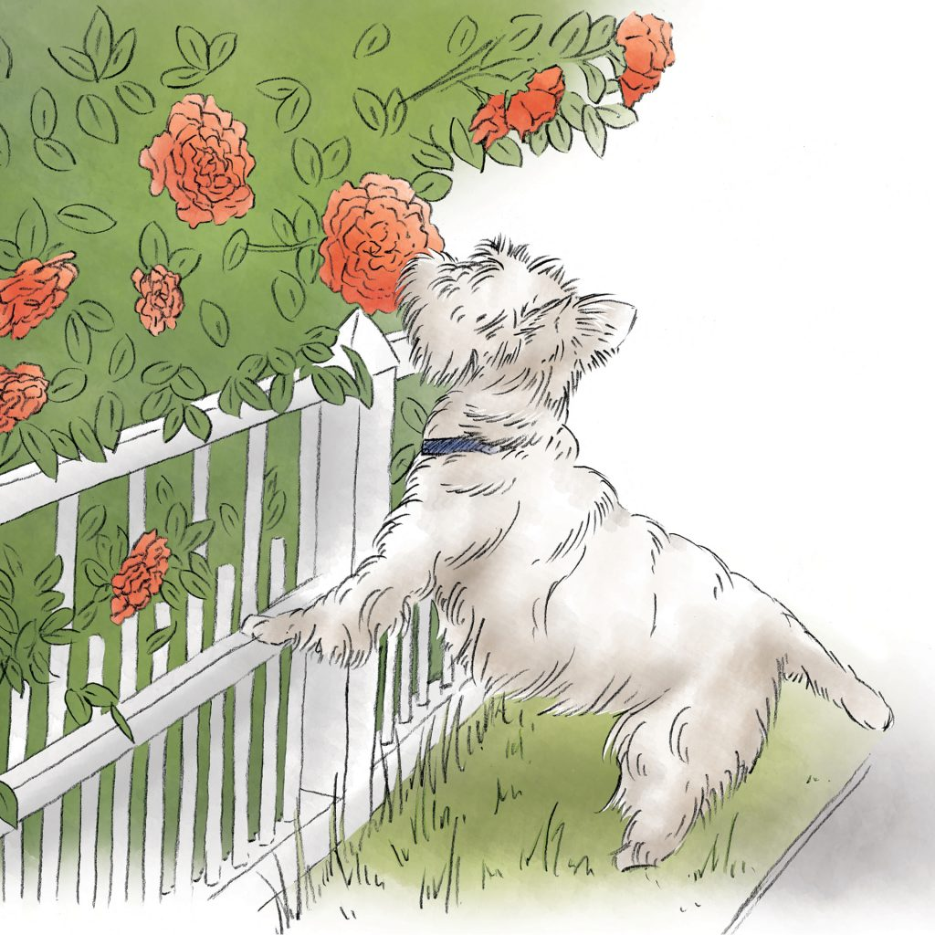'Angus and the roses' by Lauren Mullinder
