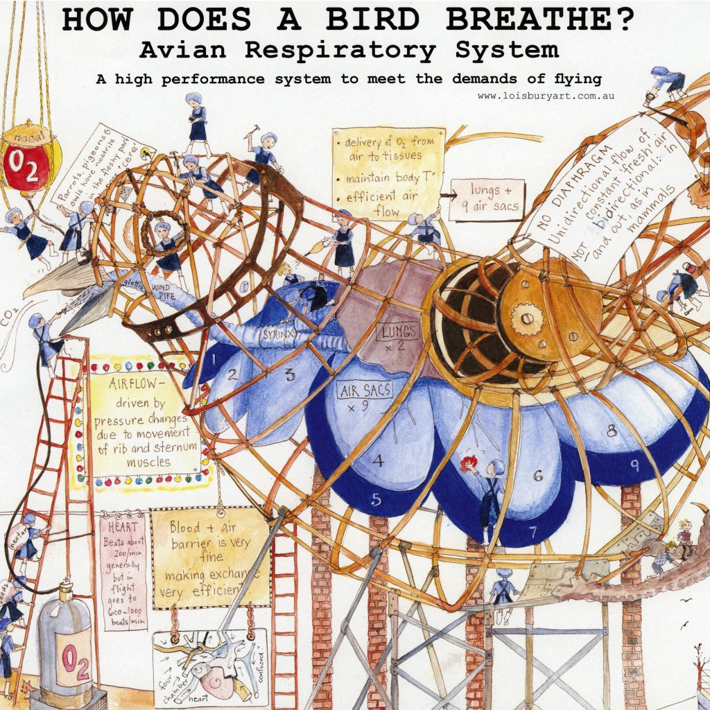 'How does a Bird Breathe?' by Lois Bury