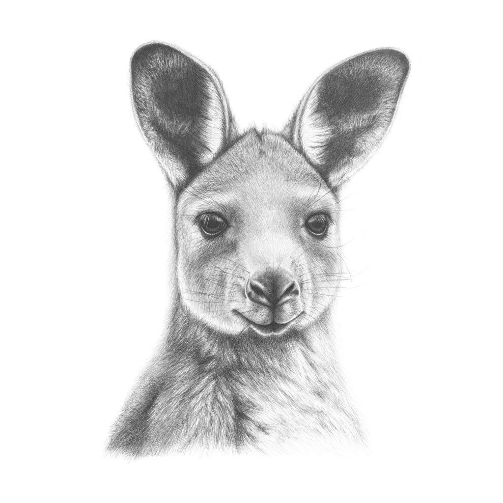 'Kangaroo' by Maxine Hamilton
