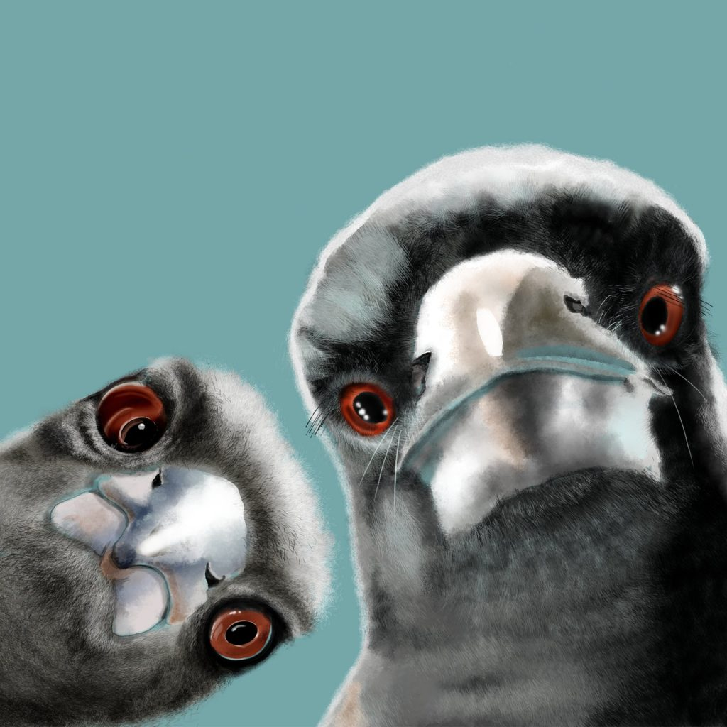CURIOUS MAGPIES by Nandina Vines