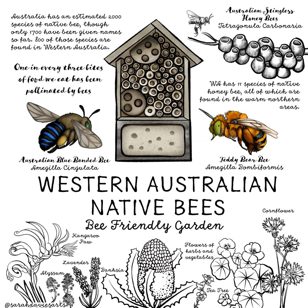 'WA Native Bees' by Sarah Davies