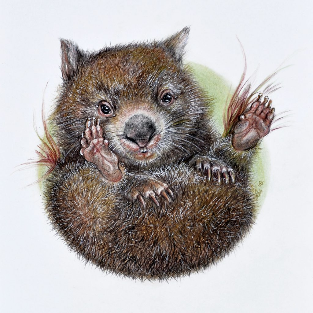 'Wombat Joey' by Lesley McGee