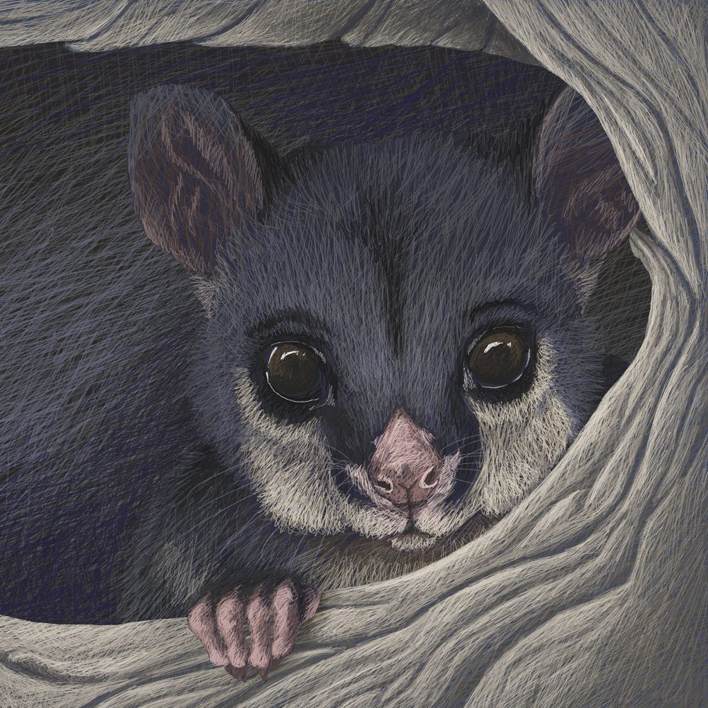 'Possum' by Katie Stewart