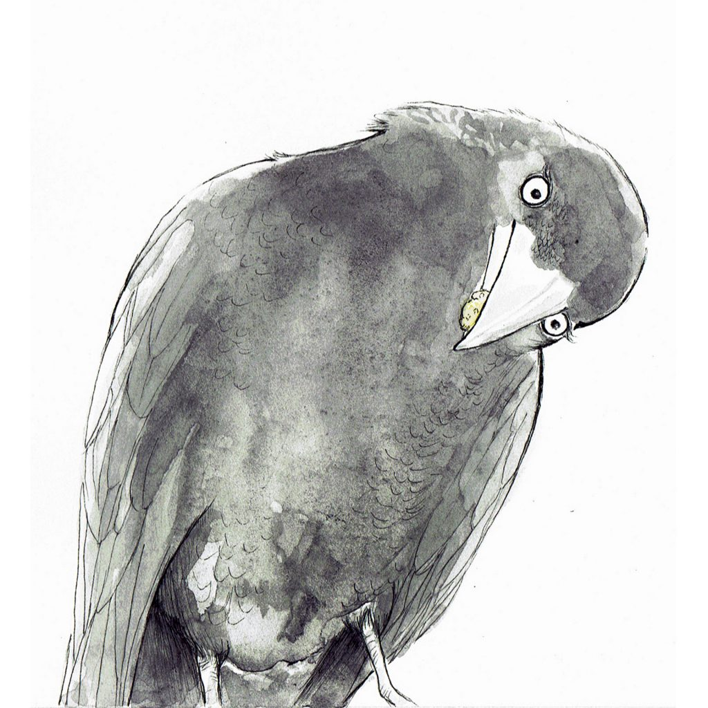 'Curious Crow' by Rachel Gregg