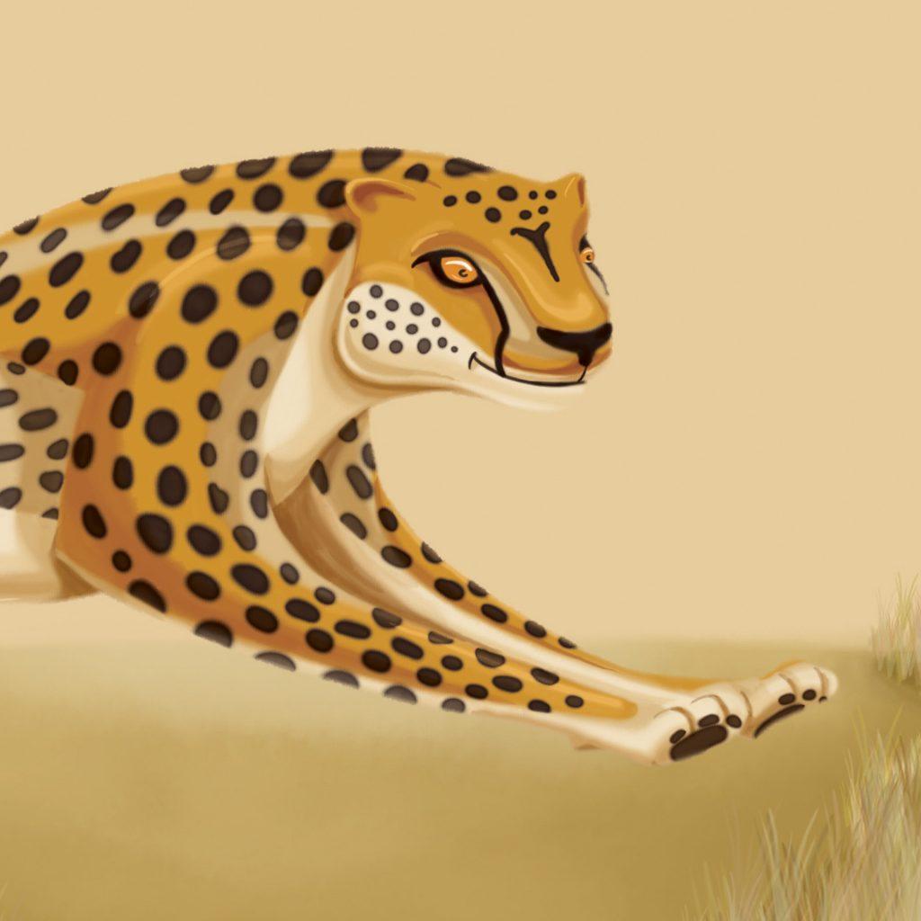 Cheetah by Simon Swingler