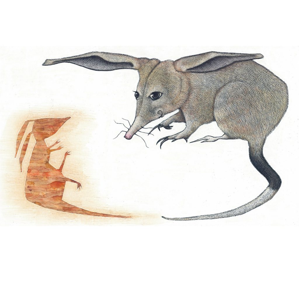 'Lesser Bilby' by Gregory Myers