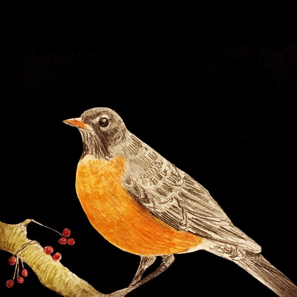 'American Robin' by Tig Beswick