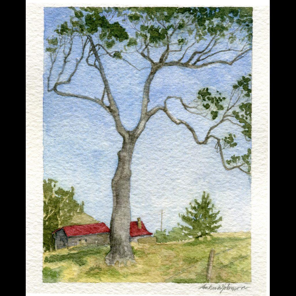 'Tilba Tree' by Amber W Johnson