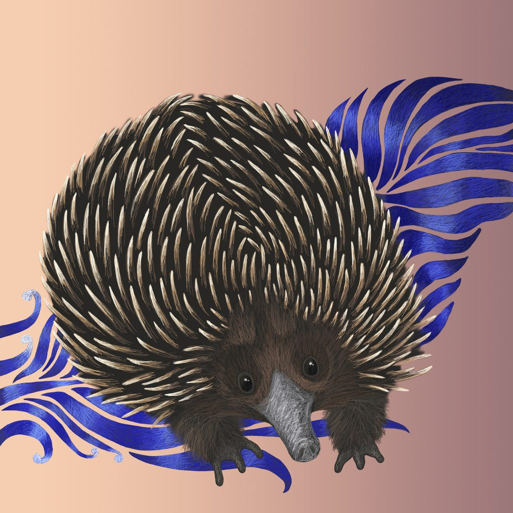Echidna from