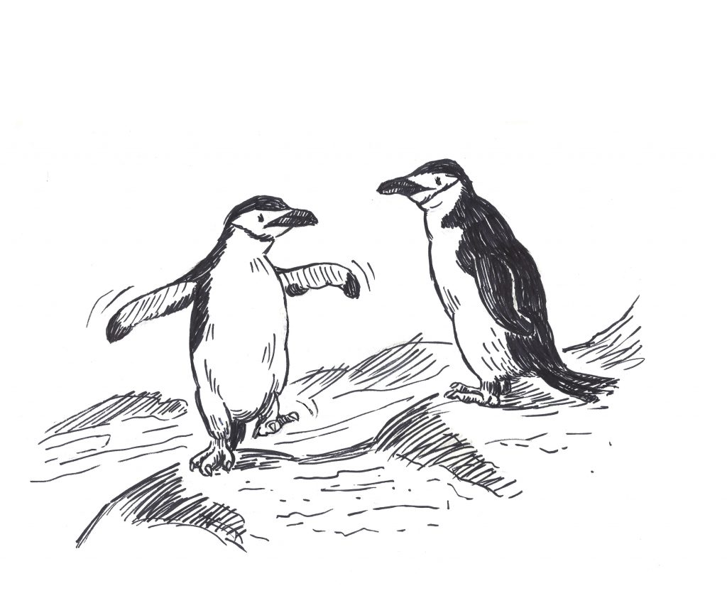 'A pair of chinstrap penguins' by Andrea Verstegen