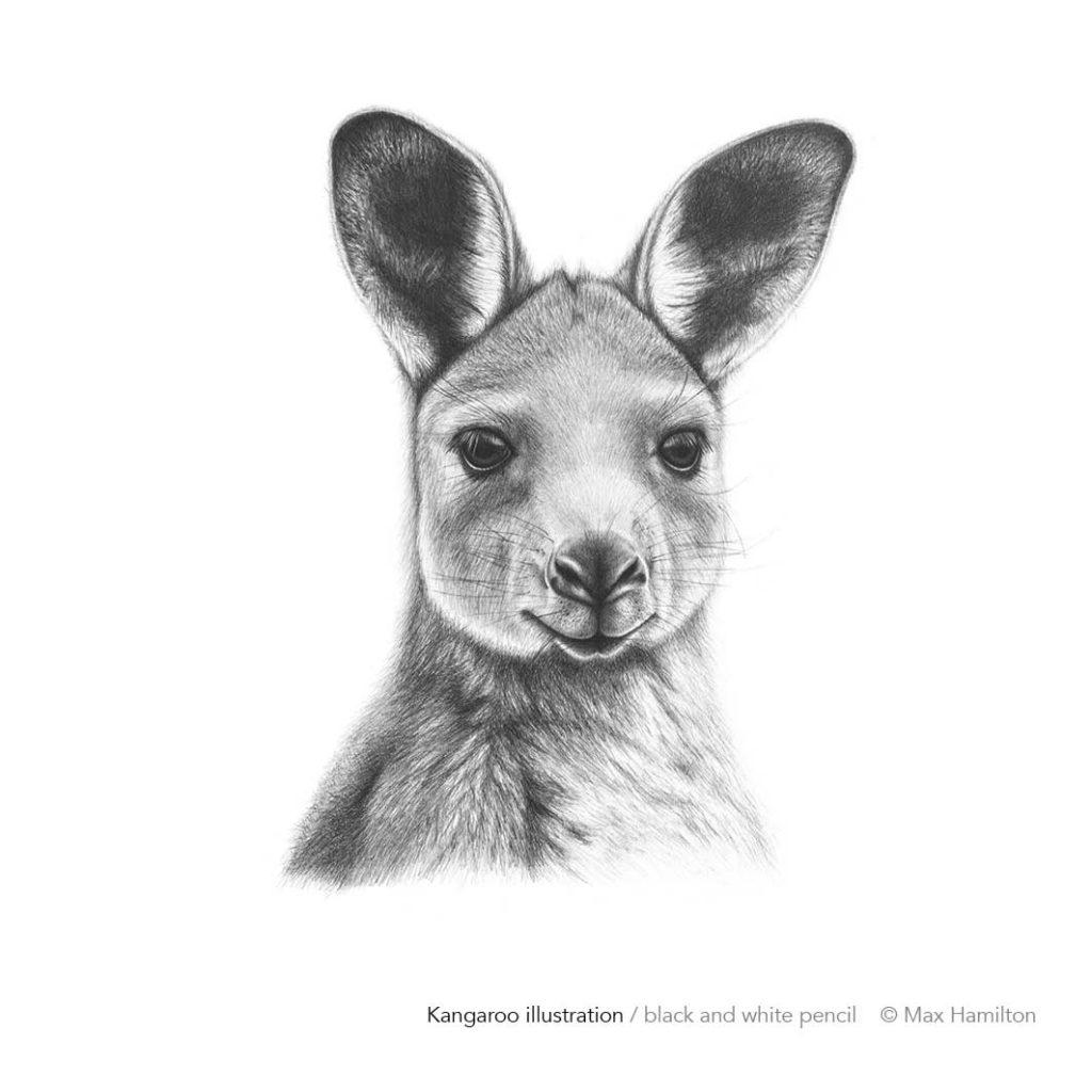 Kangaroo by Max Hamilton