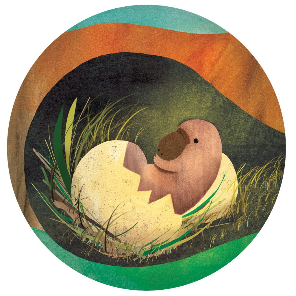 'Hatching platypus' by Jody Pratt